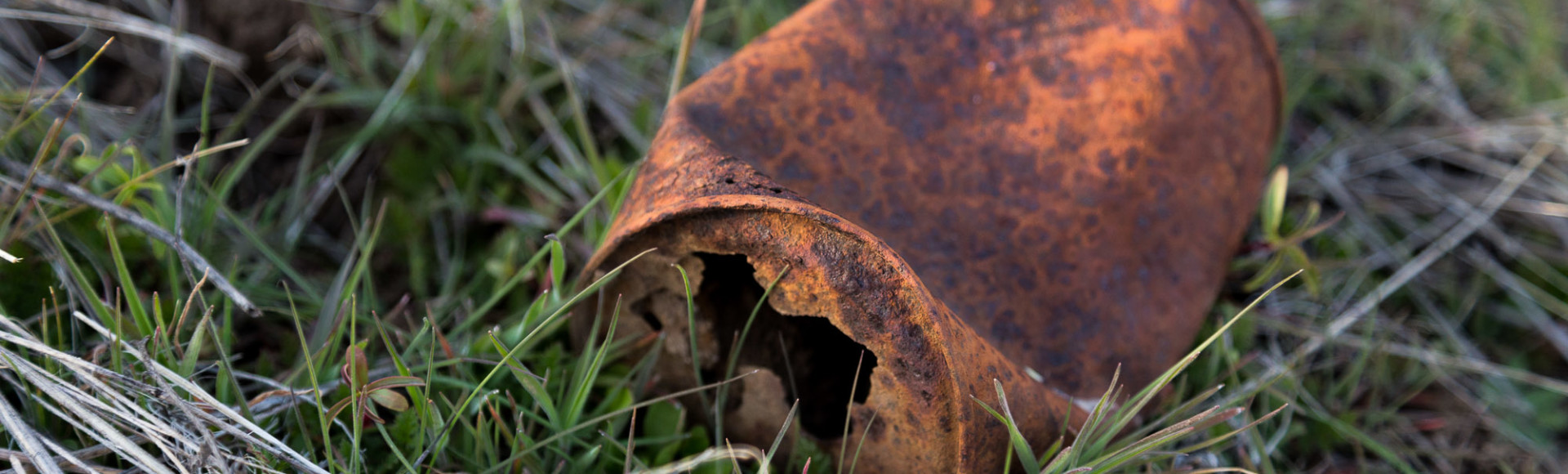 Old Rusty Can in Green Grass